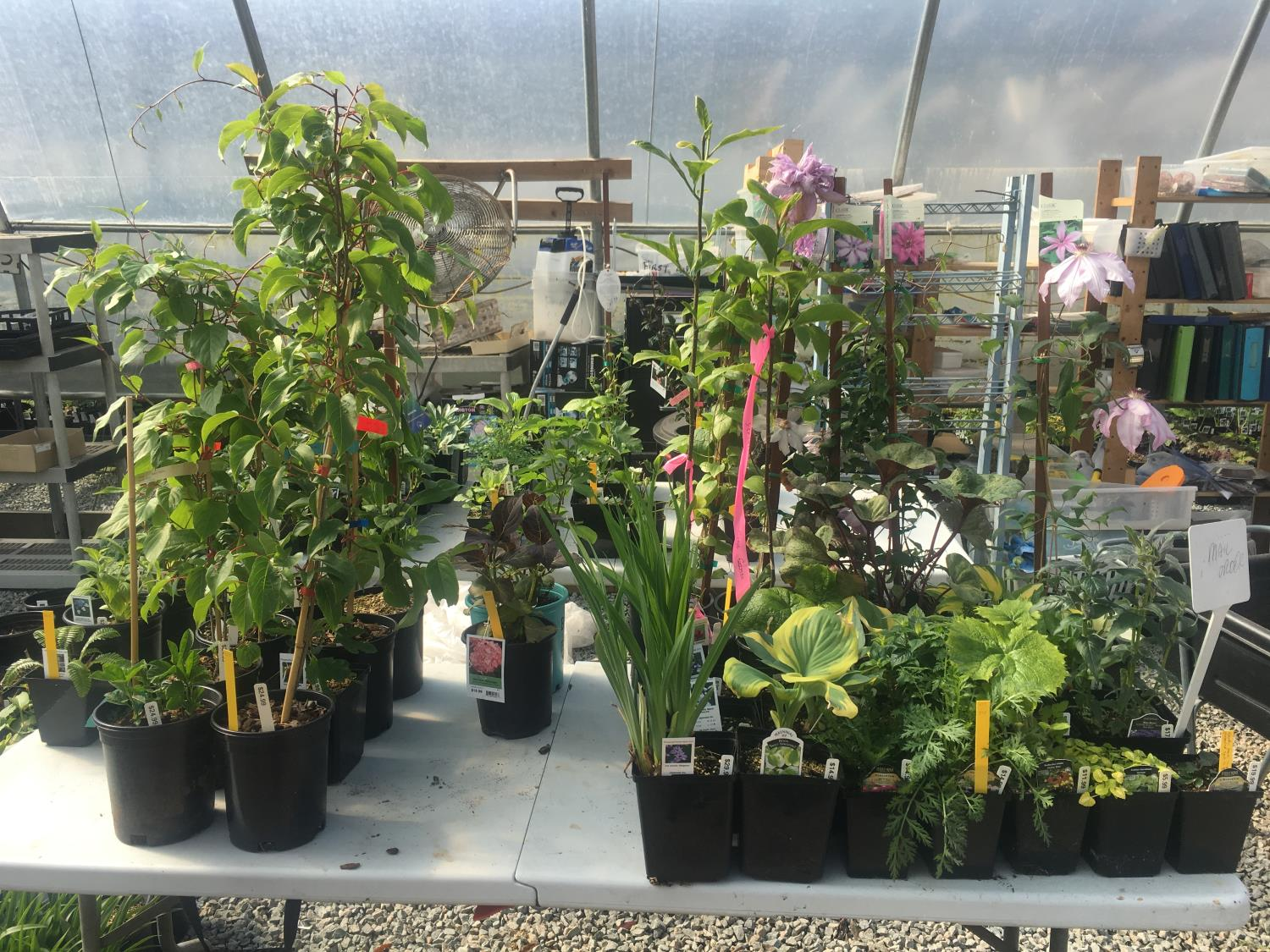 We ship full sized plants just like you'd see at your local garden centre. Here are some ready to pack.